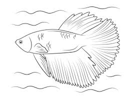 betta fish coloring pages free coloring pages