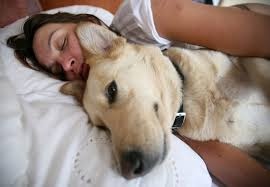 Why Does My Cat Sleep On My Bed 9 Tips For Sleeping Soundly With A Dog In The Bed Mnn Mother