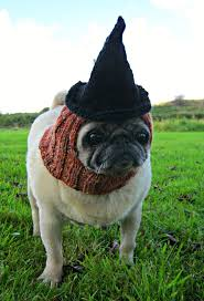 119 best animal witch images on pinterest happy halloween