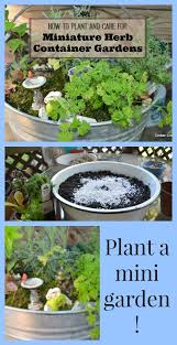 Herb Container Garden - container gardens for fall and winter indoor growing timber