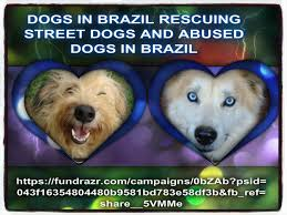 Dog Photo Albums Dogs In Brazil