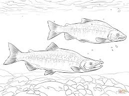 salmon coloring download salmon coloring