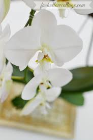 White Orchid Flower Mantel Decor And How To Diy An Orchid Flower Vase Fox Hollow Cottage