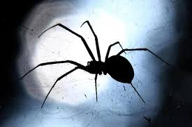 here are 13 proven ways to spider proof your home and banish the