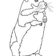 Coloriages coloriage dun bébé hamster  frhellokidscom
