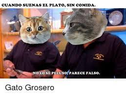 imagenes groseras de gatos 25 best memes about ebis ebis memes