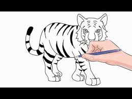 how to draw a tiger easy by