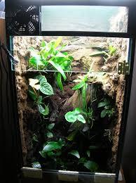 40 gallon breeder vertical dendroboard