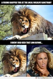 Funny Beyonce Meme - a crazy similarity between a lion and beyonce