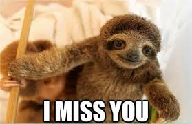 Dirty Sloth Meme - sloth meme funny sloth images and dirty sloth memes