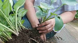 Garden Soil Types - guidelines to garden beginners in choosing the plant size and soil