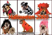 Halloween Costumes Bulldogs Bulldog Halloween Pictures Dogs Dressed Halloween