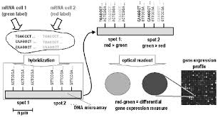 schematic sketch of differential gene expression profiling with dna