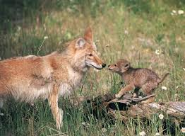 North Dakota wild animals images The 50 cutest baby animals of america state by state huffpost jpg