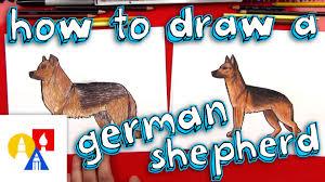 how to draw a german shepherd youtube
