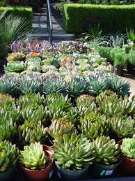 Types Of Gardening Plants Fafardcacti And Succulent House Plants