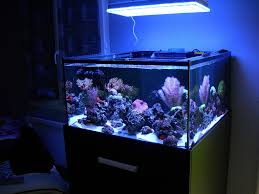 led reef lighting reviews atlantik lights french client reef aquarium orphek review orphek