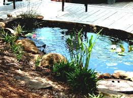 outdoor and patio small backyard pond ideas mixed with green