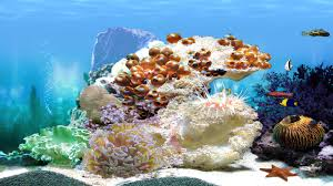 the great things about animated aquarium backgrounds animal by