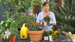 how to plant beautiful containers with annual flowers garden