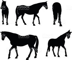 mustang horse silhouette horse silhouette in walking head up pose stock vector art