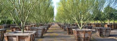 container tree downladable pdf list by western tree company