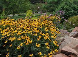 full bloom nursery clermont ga perennials