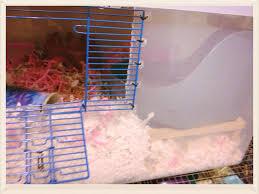 Guinea Pig Cages Walmart Diy Hamster Cage Bin Cage Hammy Happenings