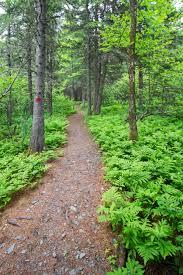 1 minute hike mingo springs trail and bird walk in rangeley act 1minhike062816 4
