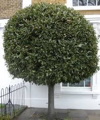 large topiary trees artificial foliage topiaries outdoor decor the