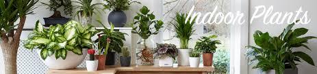buy indoor plants online bakker com