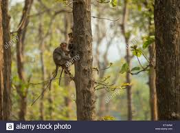Tropical Dry Forest Animals And Plants - tropical dry forest india stock photos u0026 tropical dry forest india