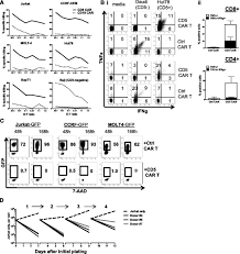 a t cell u2013directed chimeric antigen receptor for the selective