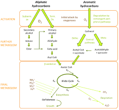 agronomy free full text root exudation the ecological driver