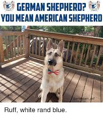 German Shepherd Memes - e german shepherd you meanamerican shepherid ruff white rand blue