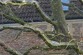 anti bird tree spikes we cars so much we destroy nature for