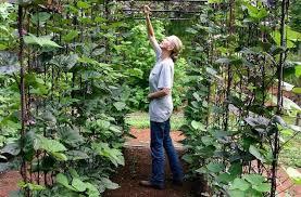 How To Grow Green Beans On A Trellis Vegetable Garden Design Diy Bean Trellis Gardenista