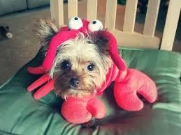 Disney Halloween Costumes Dogs 10 Cutest Dog Halloween Costumes Ariel U0026 Sebastian