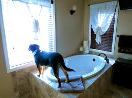 Menards Dog House Let U0027s Just Build A House House Tour Master Bath