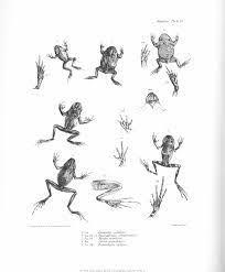 darwin drawings google zoeken darwin pinterest drawings