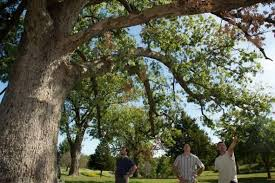 mdc offers tree health seminar in jefferson city feb 21