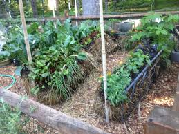 benefits of straw bale gardening hacks and how to gardensall