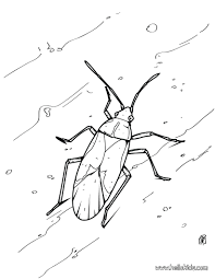 bee mosquito coloring page animal pages insect free pictures