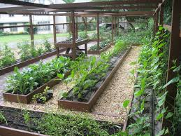 Backyard Raised Garden Ideas Wood Raised Bed Backyard Vegetable Garden Along Wire Fence And