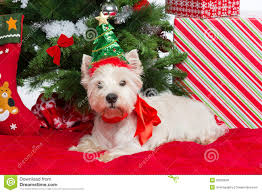 westie with new year tree stock photo image of year 35820638