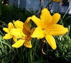 Family Pet And Garden Center - 8 best poinsonous plants images on pinterest poisonous plants