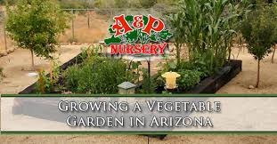 growing a vegetable garden in arizona a u0026p nursery