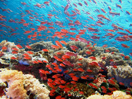 coral reef succession national geographic society