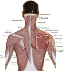 How To Palpate Subscapularis What Are The Causes Of Rotator Cuff Pathology