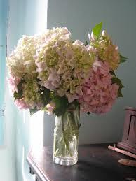 potare le ortensie in vaso ortensie da giardino idee per interni e mobili
